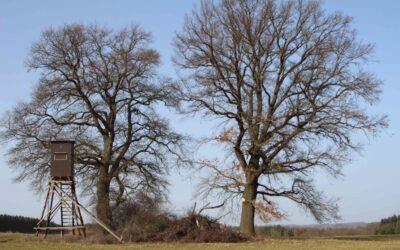 """Naturdenkmal """"3 Eichen"""" wieder komplett"""